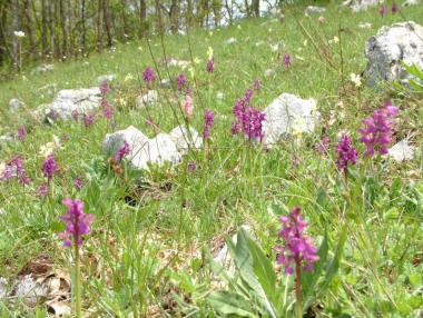 valle delle orchidee di Sassano